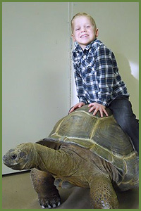 Big Al Aldabra Tortoise - Cold Blooded Creatures